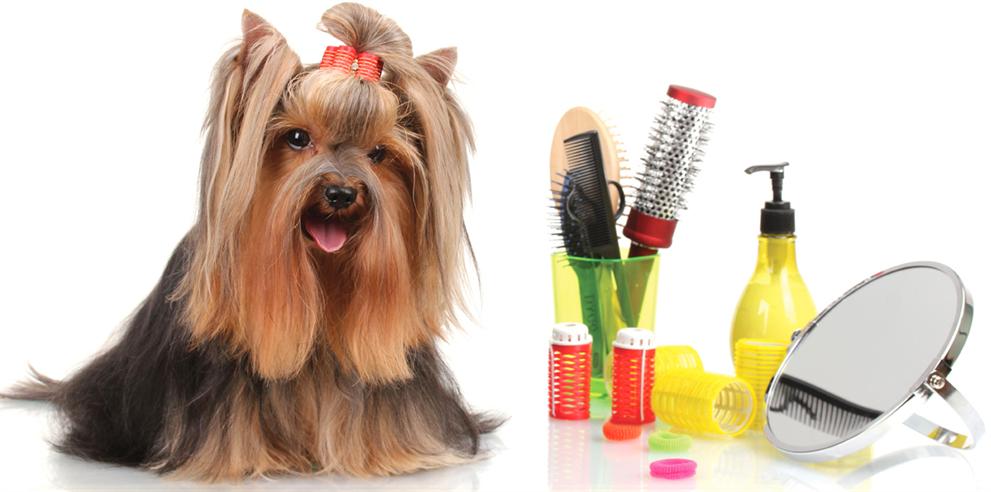 Приобретайте товары для собак со скидкой
